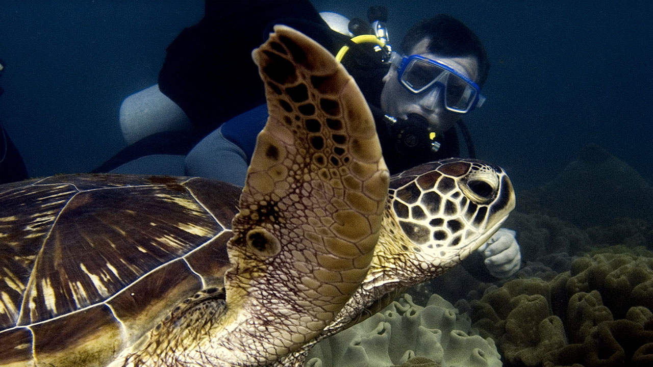 Turtle in Padang Bai With Diving Indo