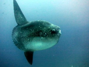Diving Indo 4 day Bali Diving Advanced package