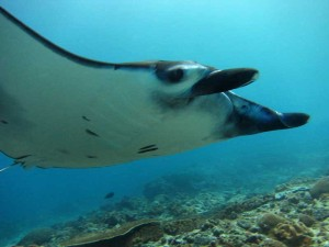 Diving Indo 3 day package