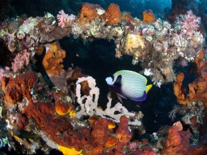Diving Bali Tulamben