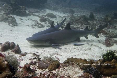 Diving in Bali Shark Point Padang Bai