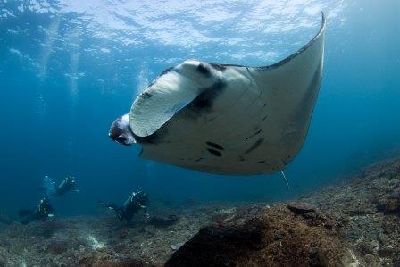 love diving Bali snorkeling manta rays