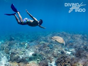 Special offers budi snk go snorkeling in Bali