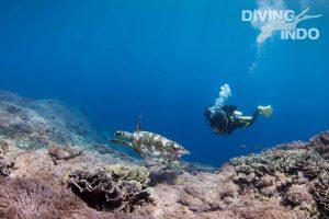 Padang Bai turtle & diver