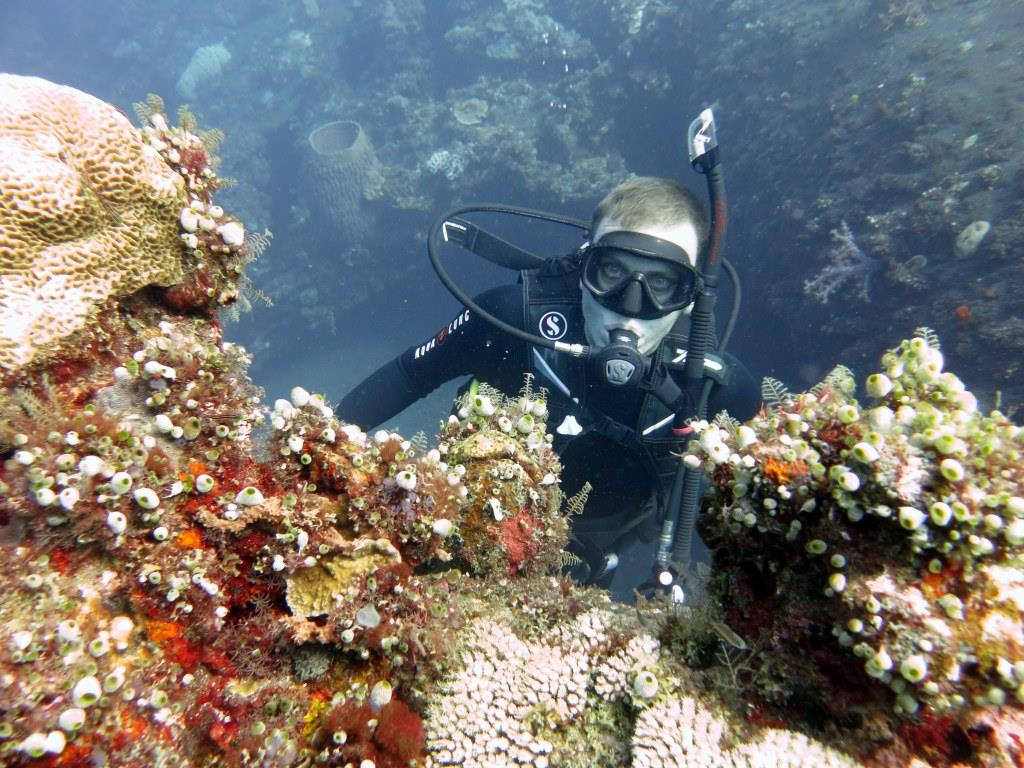 Wreck diving coral