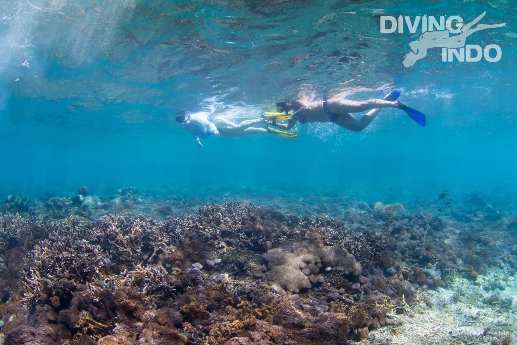 Diving Indo Bali snorkel trips