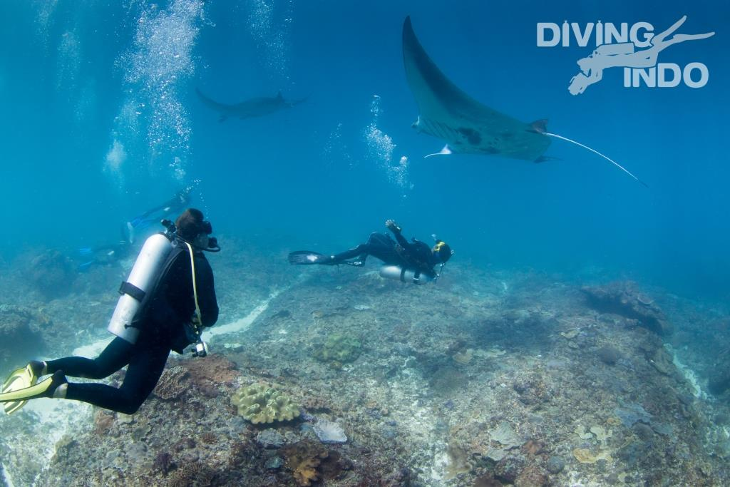 love diving things to do in bali Manta diving manta point Bali