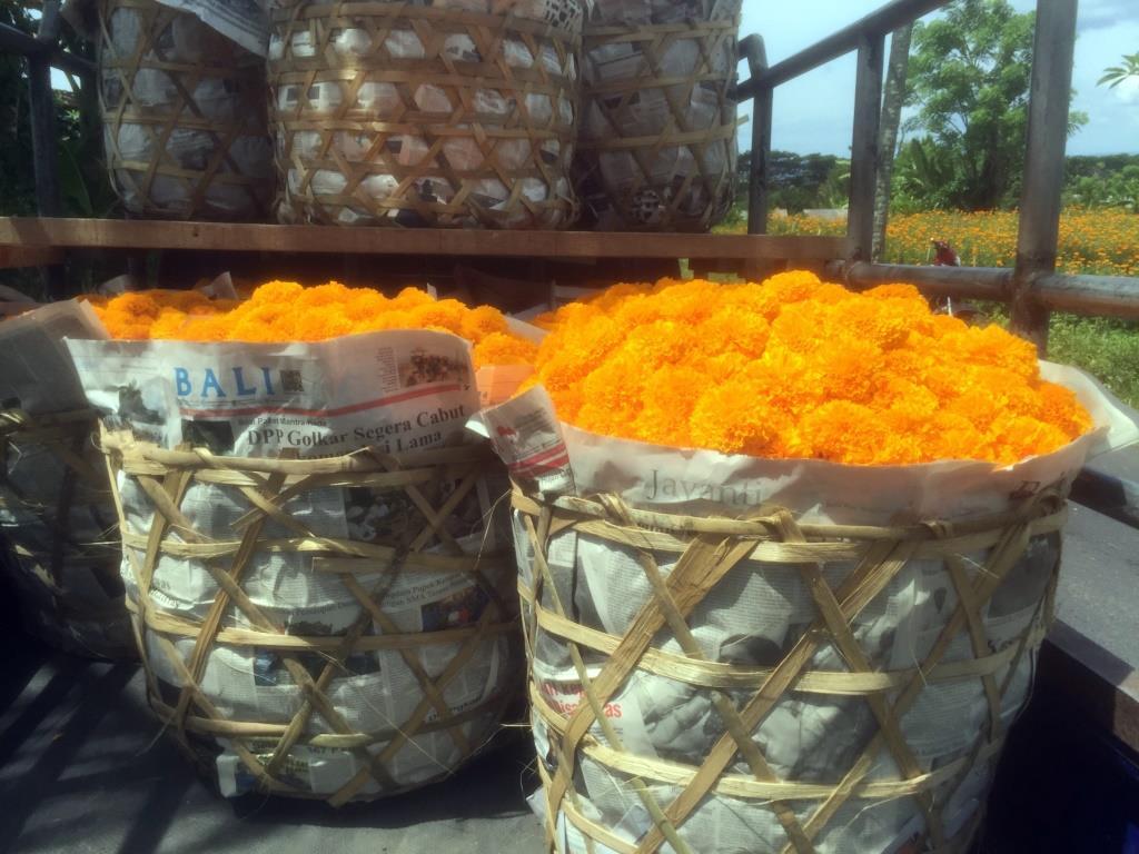 Basket marigolds