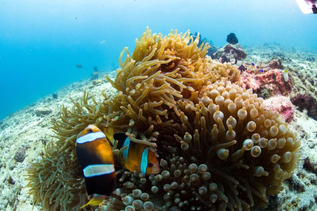 Nemo Found diving Padang Bai