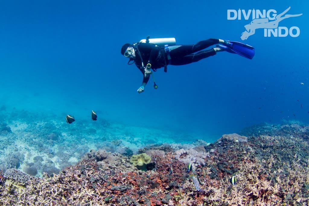 boat captain eka diving indo