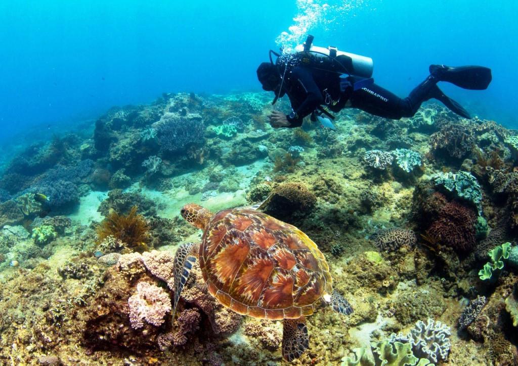 wanna race diving Padang Bai