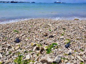 Escape Turtle conservation Bali