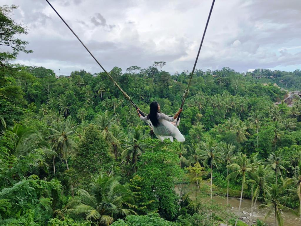iving Indo Bali swings elya office