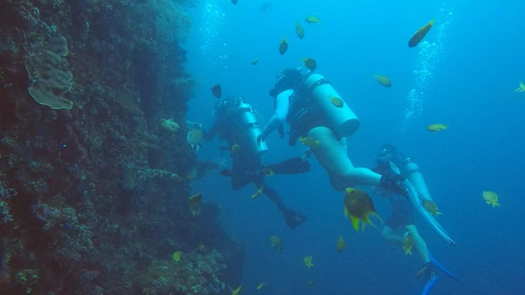 Diving the Liberty wreck from Tulamben Beach was beautiful even just as an open water diver.