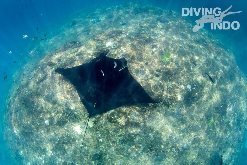 go snorkeling in Bali
