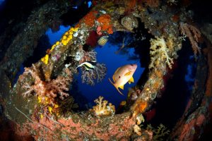 Best diving in Bali USAT Liberty wreck